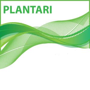 Plantari